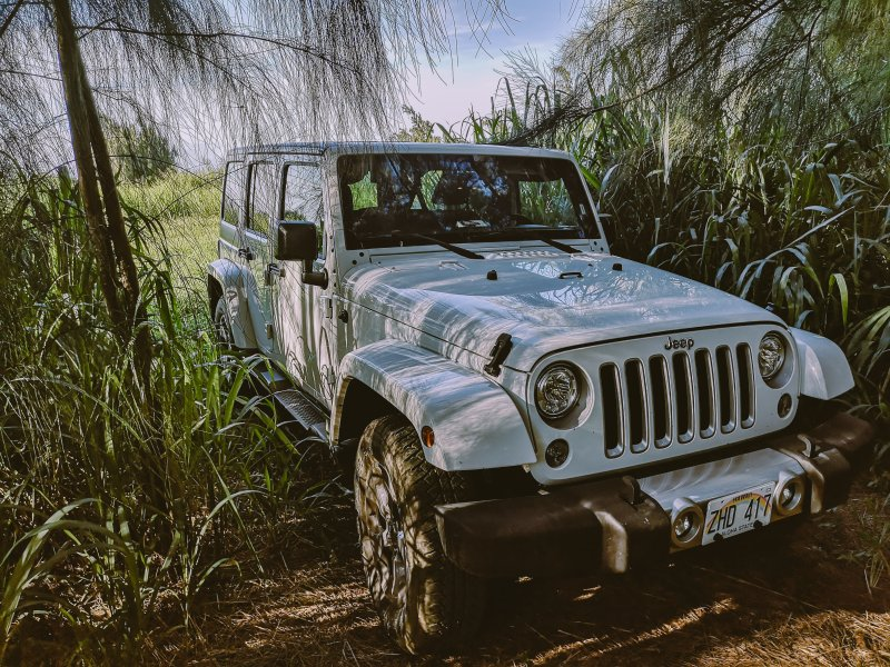 Jeep in The Jungel