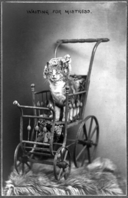 A Portrait of a Kitten Cat in a Vintage Baby Carriage Buggy, Waiting for Mistress