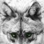 Mexican Wolf's eyes