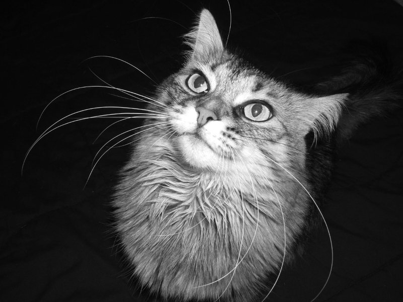 Crazy Whiskers