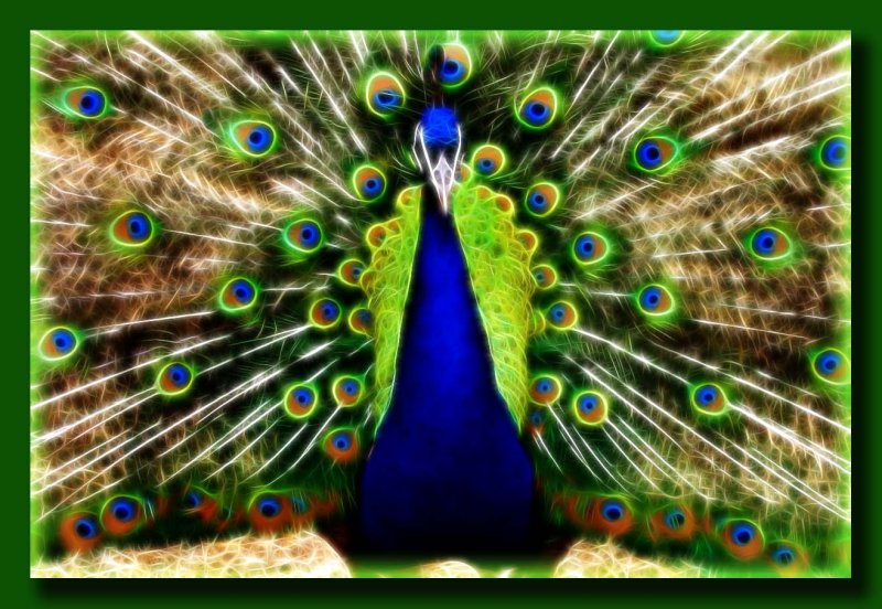 Peacock in Full Feathered Fusion          (Please Comment)