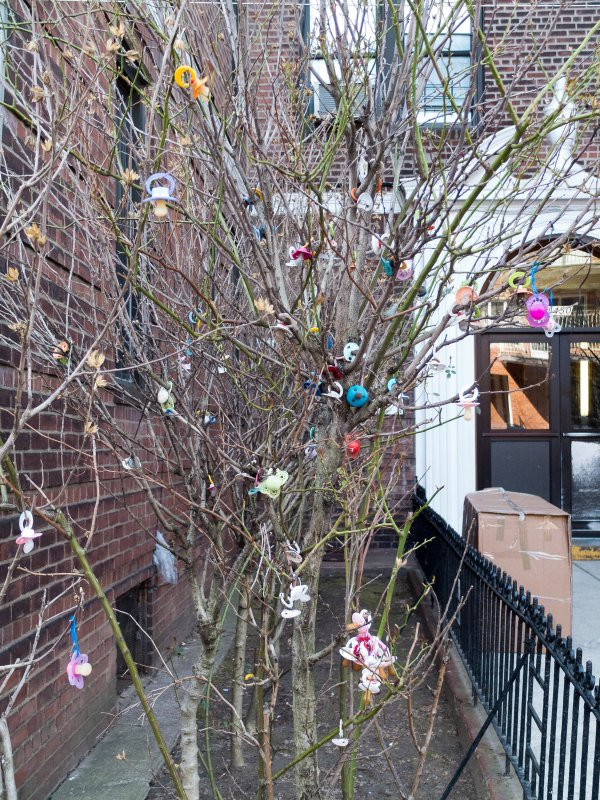 Pacifier Tree In Borough Park