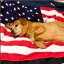 LG: 4th of July Pin-Up Dog?
